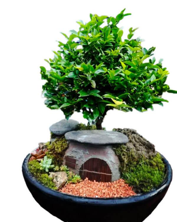 Bosque Zen con Casa Hobbit + Jóven y Exclusivo Bonsai de 3 años de edad