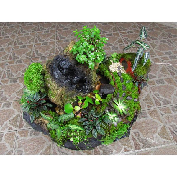 Fuente Natural en Laja + Jóven y Exclusivo Bonsai Trébol con 3 años de edad