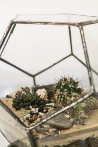 Terrario o matera dodecaedro Dode