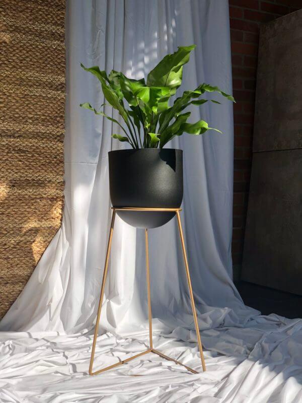 Matera dorada Omen con maceta negra en cupula