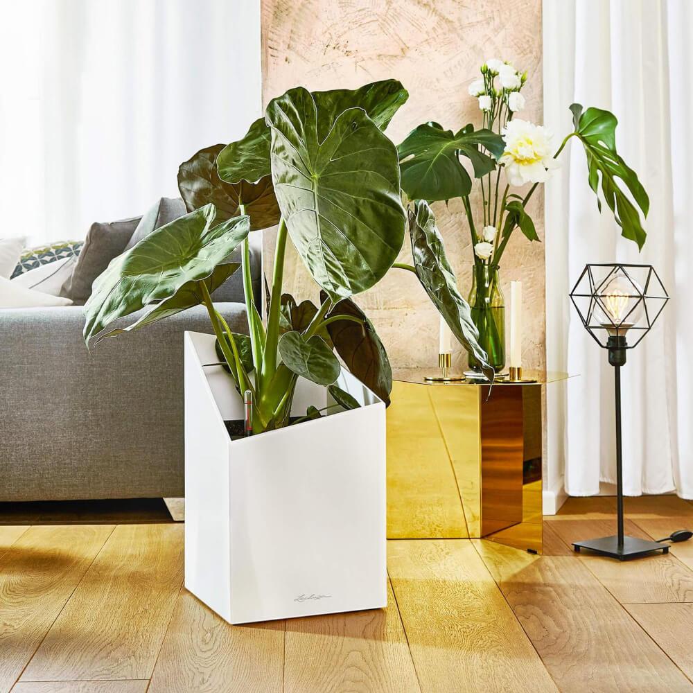 Matera de Piso Autorregante Cursivo 49 cm Blanco Ebani Colombia tienda online de decoración y mobiliario TUMATERA