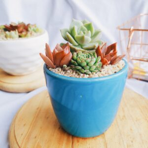 Bowl pequeño de suculentas distintas especies Ebani Colombia tienda online de decoración y mobiliario Jardin de julia