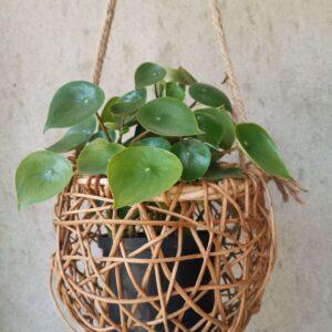 Canasta Nido Ebani Colombia tienda online de decoración y mobiliario Madre monte