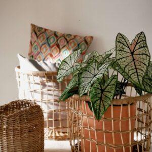 Canasta en mimbre Juana Ebani Colombia tienda online de decoración y mobiliario Madre monte