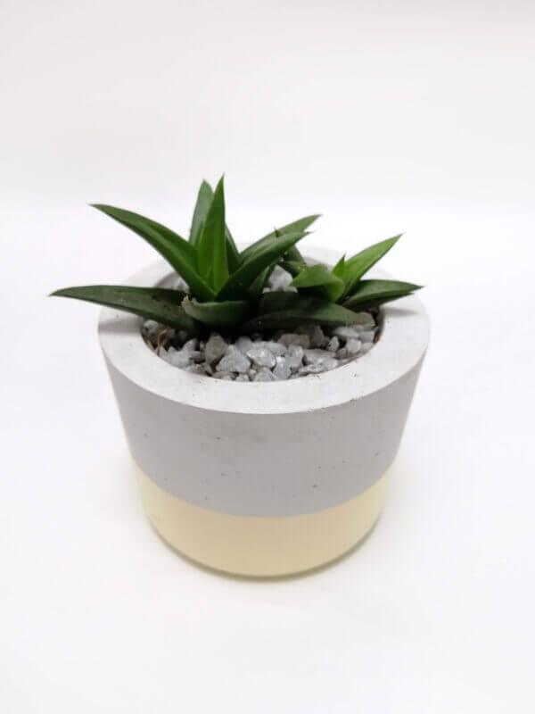 Mini matera en concreto María Ebani Colombia tienda online de decoración y mobiliario Ornamental
