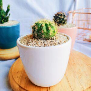 Plantas Ornamentales Suculentas Cactus Ebani Colombia tienda online de decoración y mobiliario Jardin de julia
