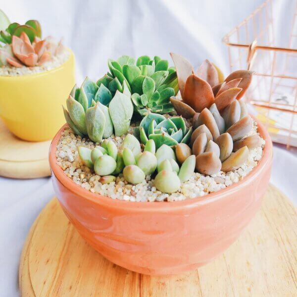 Bowl de suculentas Ebani Colombia tienda online de decoración y mobiliario Jardin de Julia