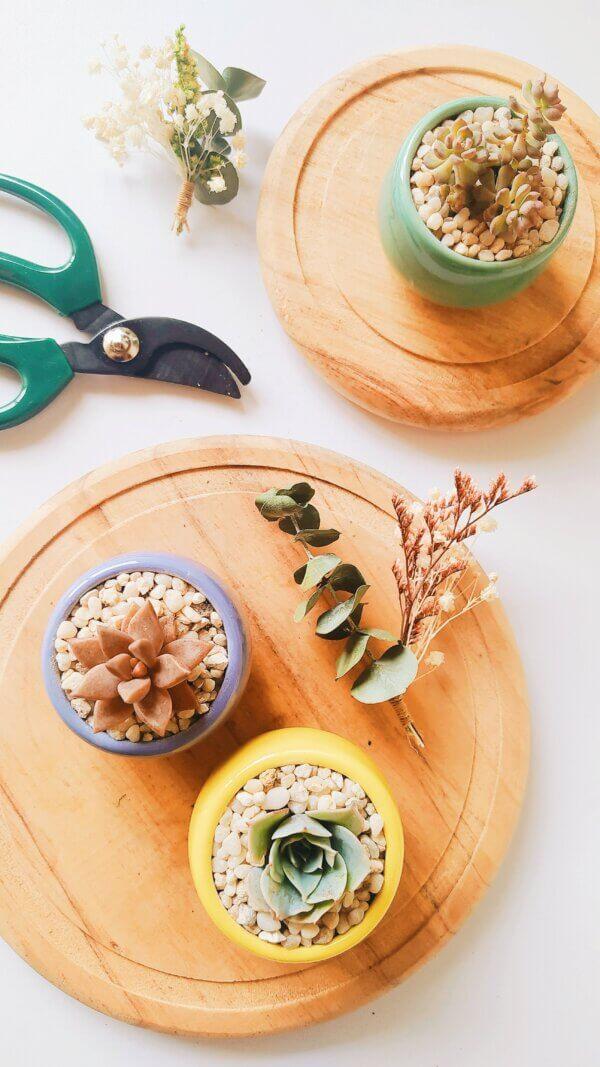 Planta Ornamental Suculentas Recordatorio Ebani Colombia tienda online de decoración y mobiliario Jardin de Julia